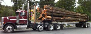 logging_banner